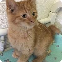 Adopt A Pet :: Finn - White Cloud, MI