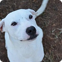 Adopt A Pet :: Harry - Athens, AL