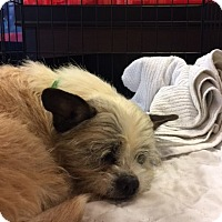 Adopt A Pet :: Massy - Powder Springs, GA