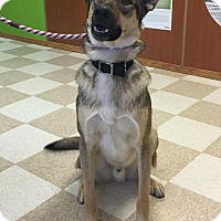 Adopt A Pet :: Luke - Kingman, KS