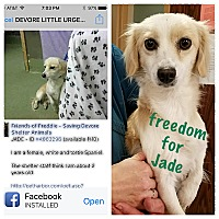 Adopt A Pet :: Jade - Thousand Oaks, CA