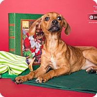 Adopt A Pet :: Maisy - Gadsden, AL