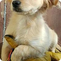 Adopt A Pet :: Jasmine-ADOPTION PENDING - Boulder, CO