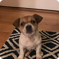 Adopt A Pet :: Bear - Charlotte, NC