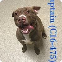 Adopt A Pet :: Captain - Tiffin, OH