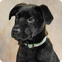 Adopt A Pet :: Chevy - St. Louis Park, MN