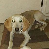 Adopt A Pet :: Lillian - Crestview, FL
