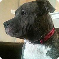 Adopt A Pet :: Ava - Justin, TX