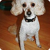 Adopt A Pet :: Rowan (Roey) - Douglas, ON