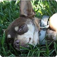 Adopt A Pet :: ESTEBAN - san diego, CA
