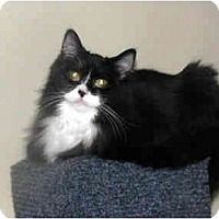 Adopt A Pet :: George - Xenia, OH