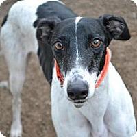 Adopt A Pet :: Frankie (FTK Cobra Clutch) - Chagrin Falls, OH