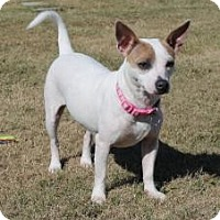 Adopt A Pet :: Jordan in Baytown - Houston, TX