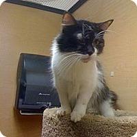 Adopt A Pet :: Jina - Monroe, GA
