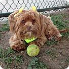 Adopt A Pet :: IMARI