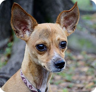 Manatee Dog Adoption