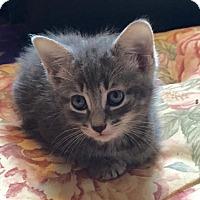 Adopt A Pet :: Gabby - East Brunswick, NJ