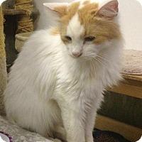 Adopt A Pet :: Kim - St. James City, FL