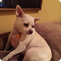 Adopt A Pet :: Leah Rose - Edmond, OK