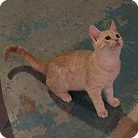 Adopt A Pet :: Turner - Geneseo, IL
