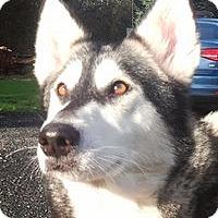 Adopt A Pet :: SESI - Seattle, WA