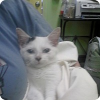 Adopt A Pet :: Small Fry - Trevose, PA