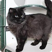 Adopt A Pet :: Shiloh - Caistor Centre, ON