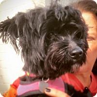 Adopt A Pet :: Cezanne - Memphis, TN
