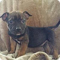 Adopt A Pet :: Zippers - Nashville, TN