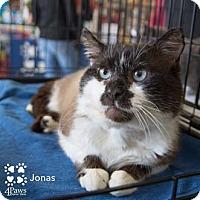 Adopt A Pet :: Jonas - Merrifield, VA