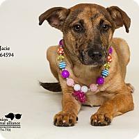 Adopt A Pet :: Jacie - Baton Rouge, LA