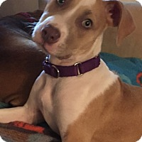 Adopt A Pet :: Willow - Richmond, VA