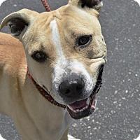 Adopt A Pet :: Topaz - Meridian, ID