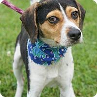 Adopt A Pet :: Leo - Potomac, MD