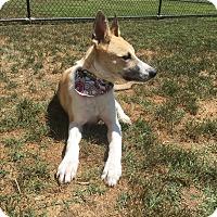 Adopt A Pet :: Sage (located in TX) - Cranston, RI