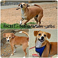 Adopt A Pet :: Rocket - Siler City, NC
