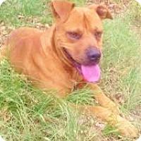 Adopt A Pet :: Gordon, sweetest family boy! - Snohomish, WA