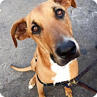 Adopt A Pet :: Laylah - Adopted! - San Diego, CA