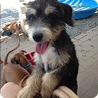 Adopt A Pet :: Kendrick - BONITA, CA