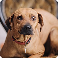 Adopt A Pet :: Spring - Portland, OR