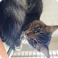 Adopt A Pet :: Nick - Riverside, CA
