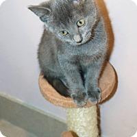 Adopt A Pet :: Charlie Bear - Ann Arbor, MI