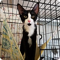 Adopt A Pet :: Bryce - Fallbrook, CA