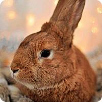 Adopt A Pet :: Milo - London, ON