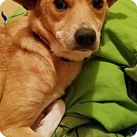 Terrier (Unknown Type, Medium) Mix Dog for adoption in Kingston, Tennessee - Honey