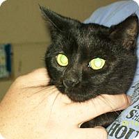 Adopt A Pet :: Sara Beth - Mexia, TX