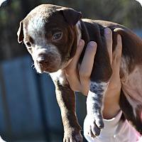 Adopt A Pet :: Battleship - Board Game Litter - Acworth, GA