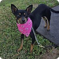 Adopt A Pet :: Daffodil - San Leon, TX