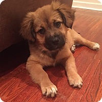 Adopt A Pet :: Addy - New Oxford, PA