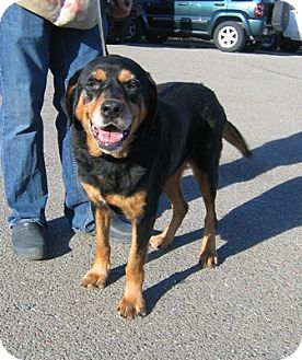 Rottweiler rescue california dog breeds picture